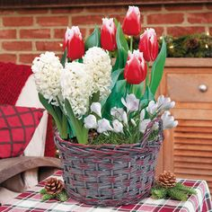 Joyful Blooms Bulb Garden: A festive blend of delightful seasonal colors, this bulb garden offers a wealth of gorgeous blooms in a variety of sizes and shapes. And don't forget the fragrance! You'll love the mix of Tulips, Hyacinths, and Crocuses. The Christmas-red and snow white blooms towering over the fragrant Hyacinths and the simple, open, glistening white Crocuses. -- This product is no longer available, however click the image to see this year's Bulb Garden Gift Plants!