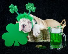 This Sleepy Green Beer Drinker