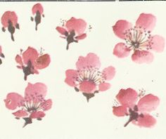 Sakura Painting, Sumi E Painting, Japan Painting, Chinese Painting, Japanese Watercolor, Japanese Art, Watercolor Flowers, Watercolor Paintings, China Art