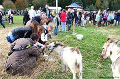 Conches-en-Ouche, Fête de la pomme Dimanche 30 octobre 2016, #Eure, #Normandie, #Conches, #ConchesEnOuche