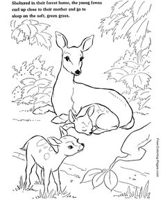 Harmonious Deer Family Coloring Pages