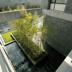 Reflective pool and bamboo that create a sense of tranquility