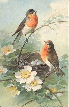 Bird Art- Vintage postcard - artist Catherine Klein