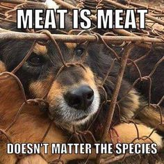 meat is meat doesn't matter the species, why finance animal cruelty? #vegan