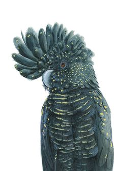 Blossom the Black Cockatoo by Australian Artist Andrew Howells painted for Stampede Style