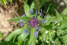 Gerade gefunden auf http://shop313566.fineartprint.de Blüte, Natur, Pflanzen, Landschaft, Blumen, Blüten, Bauerngarten, Garten