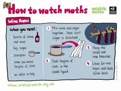 How to watch moths