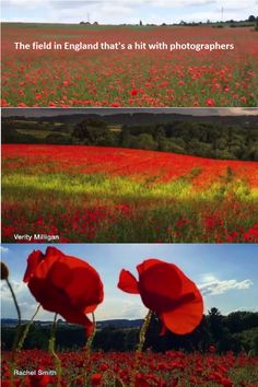 A Worcestershire field has become an online photography hit - thanks to millions of poppies. Photographers have posted wonderful images from the field on Facebook, Twitter and Instagram. It lies just off the A449 near Cookley, between Kidderminster and Stourton.