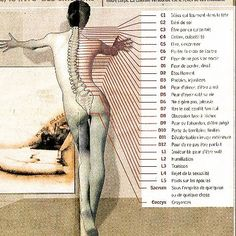 Quand votre dos joue au Yo-Yo avec vos émotions et vous provoque des douleurs. N'hésitez pas à lire mon article : https://lessen-ciel.com/2018/01/12/le-livre-du-dos/#comments #lelivredudos #back #douleursdorsales #dos #herniediscale #guyroulier #emotions #healthy @editionsdangles #book #backpain