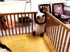 21 Baby Pandas On A Mission To Destroy You With Their Cuteness