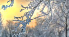 Frosty Glow by Sharon Olk on Capture Wisconsin // Hoar frost at sunrise