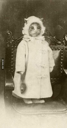 Weird Creepy Vintage Photos from the Scary Olden Days Bizarre vintage photo of cat. Proof that people have been dressing animals in costumes for ages:)Bizarre vintage photo of cat. Proof that people have been dressing animals in costumes for ages:) I Love Cats, Crazy Cats, Cute Cats, Funny Cats, Funny Animals, Cute Animals, Weird Vintage, Tier Fotos, Here Kitty Kitty