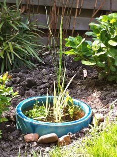 wassergarten anlegen mini teich graben bepflanze