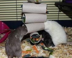 Diy Mouse Toys, Diy Rat Toys, Pet Toys, Diy Rodent Toys, Rat Cage Diy, Pet Rat Cages, Rata Dumbo, Rat Cage Accessories, Diy Accessories
