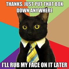 Cats do love boxes...  #Business #Cat