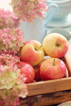 Craftberry Bush: Homemade Apple Tea