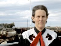 The Woman who thinks like a Cow: Dr Temple Grandin has the unique ability to understand the animal mind. She uses her gift to change the way animals are held and slaughtered. Dr Temple Grandin, Animal Welfare Board, Animal Articles, Cattle Drive, Feel Good Stories, Science Nature, Animal Rescue, Documentaries, Cow