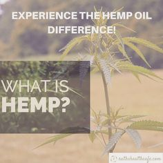 Digging Deeper: Your Complete Overview of Hemp And It's Goodness