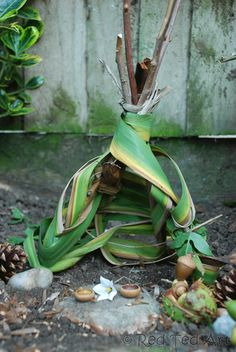 Get closer to nature - see what you can find and then make some Fairy Houses... here we made a TeePee Fairy House.