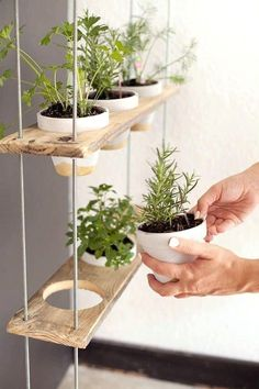 Diy Garden Shelf Hang Mosquito Repellent Plants In The Back Yard Hanging Herb Garden Homemade Outdoor Shelf