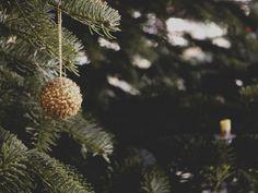 Manchmal passiert es einfach- es landet ein Geschenk unter dem Baum, das dir nicht gefällt, oder das einfach nicht zu dir passt. Hier gebe ich dir ein paar Ideen, wie du ungeliebten Weihnachtsgeschenken einen neuen Sinn geben kannst. #energieleben #wienenergie #weihnachten #geschenke #zerowaste #nachhaltigkeit Zero Waste, Dandelion, Flowers, Plants, Sustainability, Xmas Presents, Couple, Dandelions, Florals