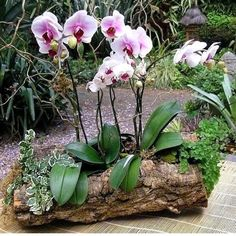 How To Keep Orchids Alive And Looking Gorgeous Orchid Flower Arrangements, Orchid Planters, Orchid Centerpieces, Orchids Garden, Garden Plants, House Plants, Garden Trees, Shade Garden, Orchid Plant Care