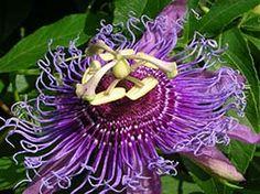 10 najneobičnijih biljaka na svetu