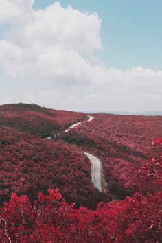 avenuesofinspiration:  Red Forest   Source    AOI