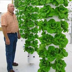 Hydroponic Gardening tower garden-I have something like this only shorter, for strawberries, that I will use next year, but I really love these taller towers! what a great use of space. Hydroponic Gardening, Plants, Garden, Vertical Farming, Small Gardens, Urban Garden, Tower Garden, Vertical Garden, Garden Plants