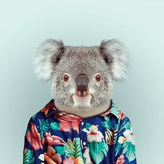 koala Zoo portraits photo-montage by Yago Partal, a graphic artist based in Barcelona.