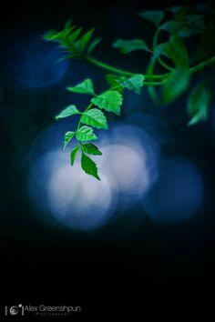 Moonshine-leaves-1-900