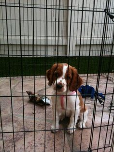 Puppy Jail, really!  Digging can't be a crime!