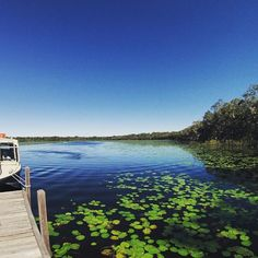Cruising the magnificent and mirrored waters of the Noosa Everglades onboard The Discovery Group!