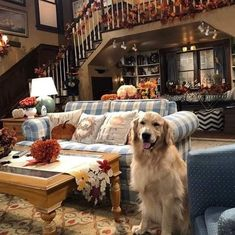 Goodbye to this cute guy December 17 2019 at Cute Guys, Puppies, Dogs, Animals, December 17, Full House, Cubs, Animales, Animaux