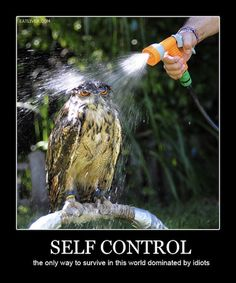 Self control – the only way to survive in this world dominated by idiots
