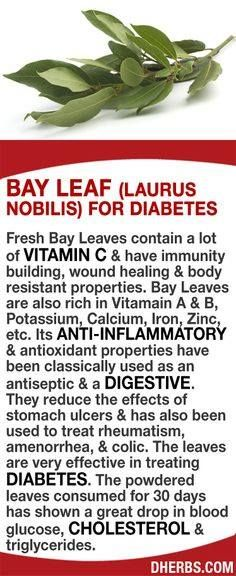 Fresh Bay Leaves contain a lot of Vitamin C & have immunity building wound healing & body resistant properties. Bay Leaves are also rich in Vitamain A & B Potassium Calcium Iron Zinc etc. They can reduce the effects of stomach ulcers & has also been Health And Nutrition, Health And Wellness, Health Tips, Health Benefits, Herbal Medicine, Natural Medicine, Herbal Remedies, Health Remedies, Natural Cures
