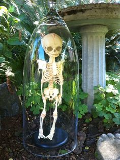 30 week old Human Fetal Skelton in glass Cloche Dome. $649.00, via Etsy.