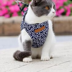 Cat Vest Harness and Leash Set to Outdoor Walking – easy-dogge Sweet Dogs, Cat Harness, Cat Carrier, Curious Cat, Mundo Animal, Cat Grooming, Dog Bed, Small Dogs, Cute Cats