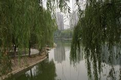 Reflections of the big city on Xingqing Park - Xi'an, China