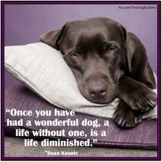 Once you have had a wonderful dog life without one, is a life diminished.