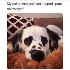 "8,000 Likes, 36 Comments - just  videos! (@thepetpark) on Instagram: ""love this❤️ @thepetpark   #thepetpark #love #doggo #cute #aww"""