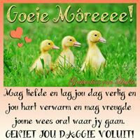 Afrikaanse Quotes, Simply Life, Goeie More, Good Morning Good Night, Special Quotes, Animals, Motivational, Blessings, Faith