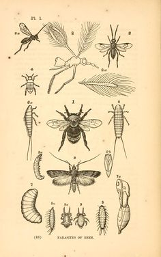 Our common insects. A popular account of the in...