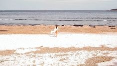 L'été tarde à arriver mais on y croit !         #corsica #corse #pinarellu #beach #plage #seaside #islandlife #corsicamylove Corsica, Instagram, The Beach