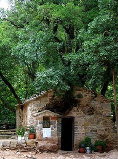 'Agia Theodora, Vasta, Arcadia, has 17 enormous holly and maple trees growing on its roof. Most of them are taller than 30 meters. Saint Chapelle, Greek Beauty, Stone Houses, Kirchen, Greece Travel, Greek Islands, Athens, The Good Place, Cool Photos