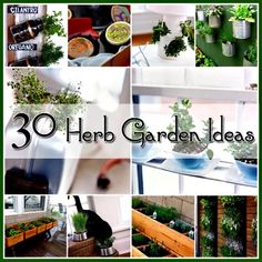 30 Great Herb Garden Ideas (Neat projects - both indoor and outdoor herb gardens)