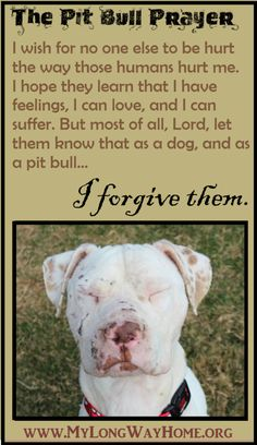 The Pit Bull Prayer... everyone needs to see the show Pitbulls and Parolees... if you ever doubt a pit bull or the breed, this show will show you that even pits that get THE WORST outcome or are used to fight or as bait dogs can even be SO GRATEFUL to be rescued, and even the most unforgiving can be rehabilitated into community, loving, family dogs.