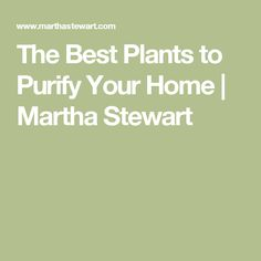 The Best Plants to Purify Your Home | Martha Stewart