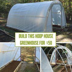 diy greenhouse Archives - Off Grid World Diy Greenhouse Plans, Greenhouse Supplies, Greenhouse Growing, Greenhouse Wedding, Homemade Greenhouse, Greenhouse Gardening, Small Greenhouse, Portable Greenhouse, Indoor Greenhouse