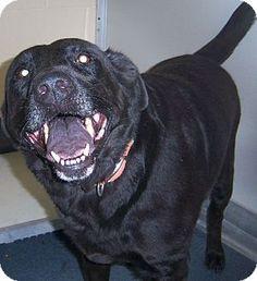 """Shelter:    Henrico County Police Animal Shelter        Phone:      (804) 727-8800   Let 'em know you saw """"DA 35"""" on Adopt-a-Pet.com!"""